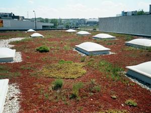 Zelená střecha extenzivní