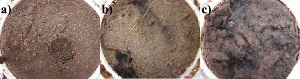 Obr. 7. Test vzniku plísně na povrchu hliněných omítek.