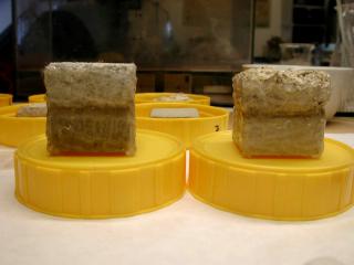 Obr. 02 Uspořádání experimentu pro hodnocení rychlosti odparu různými typy nasákavých a nenasákavých materiálů.
