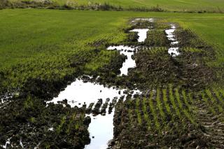 Obr. 04 Příklad zamokřeného pozemku vlivem špatné údržby drenáže