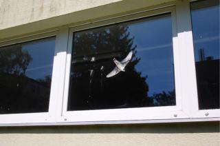 """Neúčinné je zabezpečování skel jednou siluetou """"dravce"""", která má ptáky plašit. Stopy po nárazech je často možné dohledat hned vedle siluety; budova ZŠ v Uherském Hradišti"""