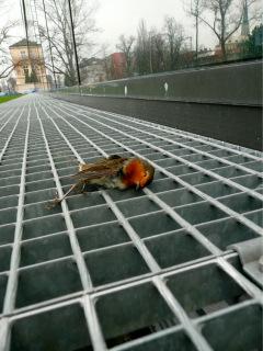 Dohledání kadáveru (mrtvoly) přímo pod místem kolize je jasným důkazem nebezpečnosti konkrétní prosklené plochy; budova Přírodovědecké fakulty Univerzity Palackého v Olomouci