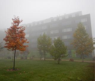 K většině fatálních kolizí dochází za zhoršených světelných podmínek – při setmění a rozednění, za mlhy. Nejkritičtějším obdobím je podzim, kdy jsou tyto podmínky častější, a navíc probíhá migrace ptáků na jih, včetně nezkušených mláďat; budova PřF UP v Olomouci